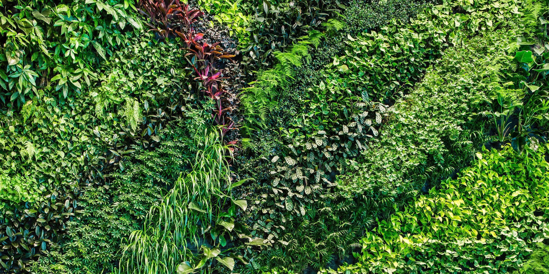 Tường cây xanh ngoài trời