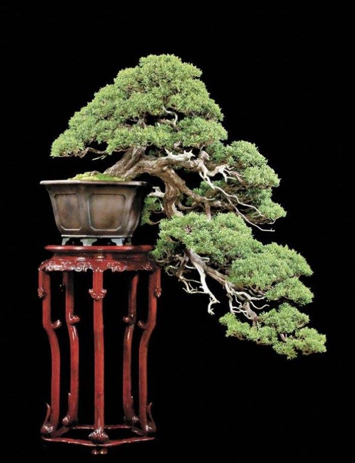 Việc uốn cành hợp lý, kết hợp với kỹ thuật trồng cây kĩ lưỡng sẽ cho ra những chậu bonsai đẹp